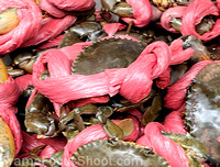 Hard crabs ready for market.